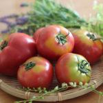 トマトケチャップトマト