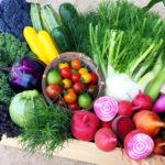 ヨーロッパ野菜